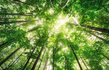 foret-arbres